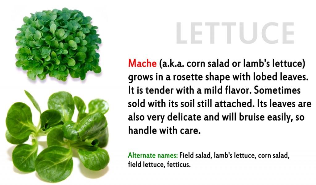 Promo - lettuce 10 Mache