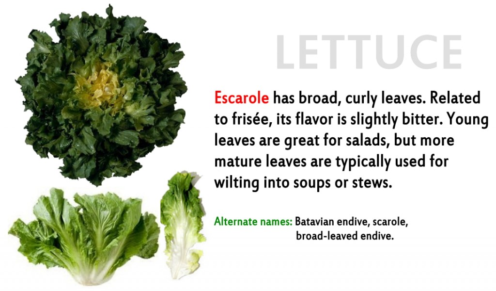 Promo - lettuce 12 Escarole