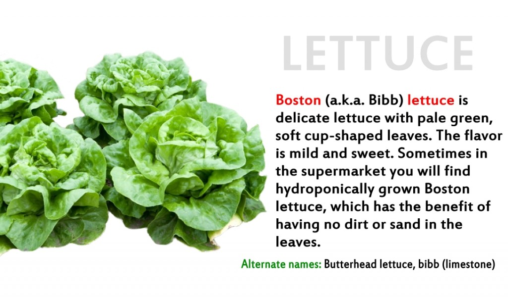 Promo - lettuce 2 Boston