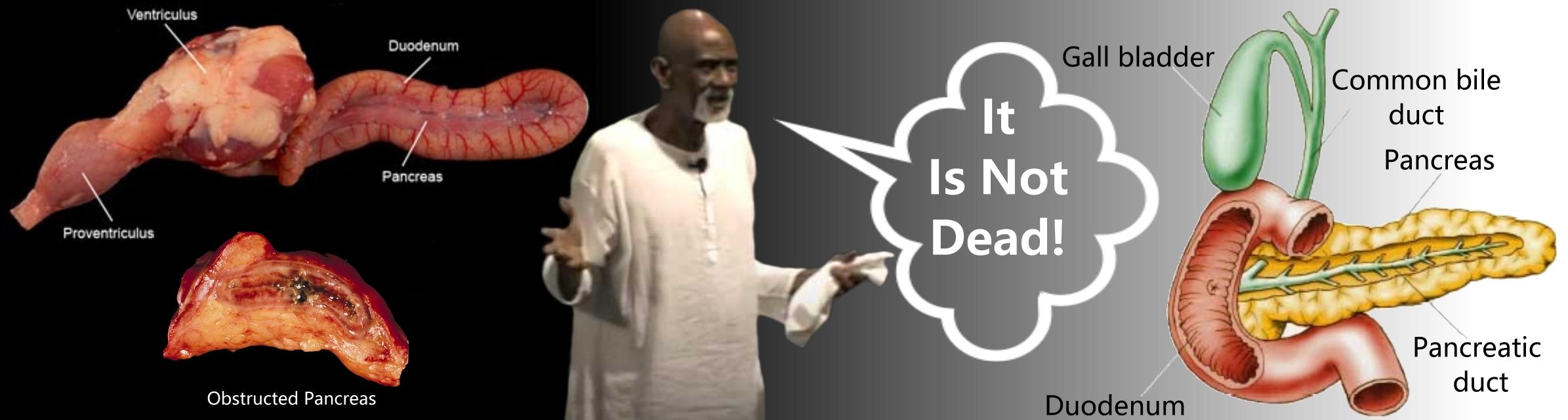 Dead Pancreas – Advocates for Dr  Sebi