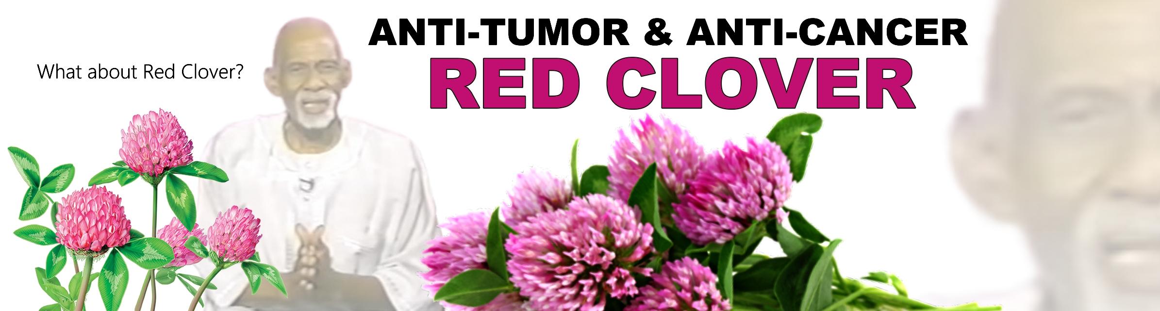 Red Clover – Advocates for Dr  Sebi
