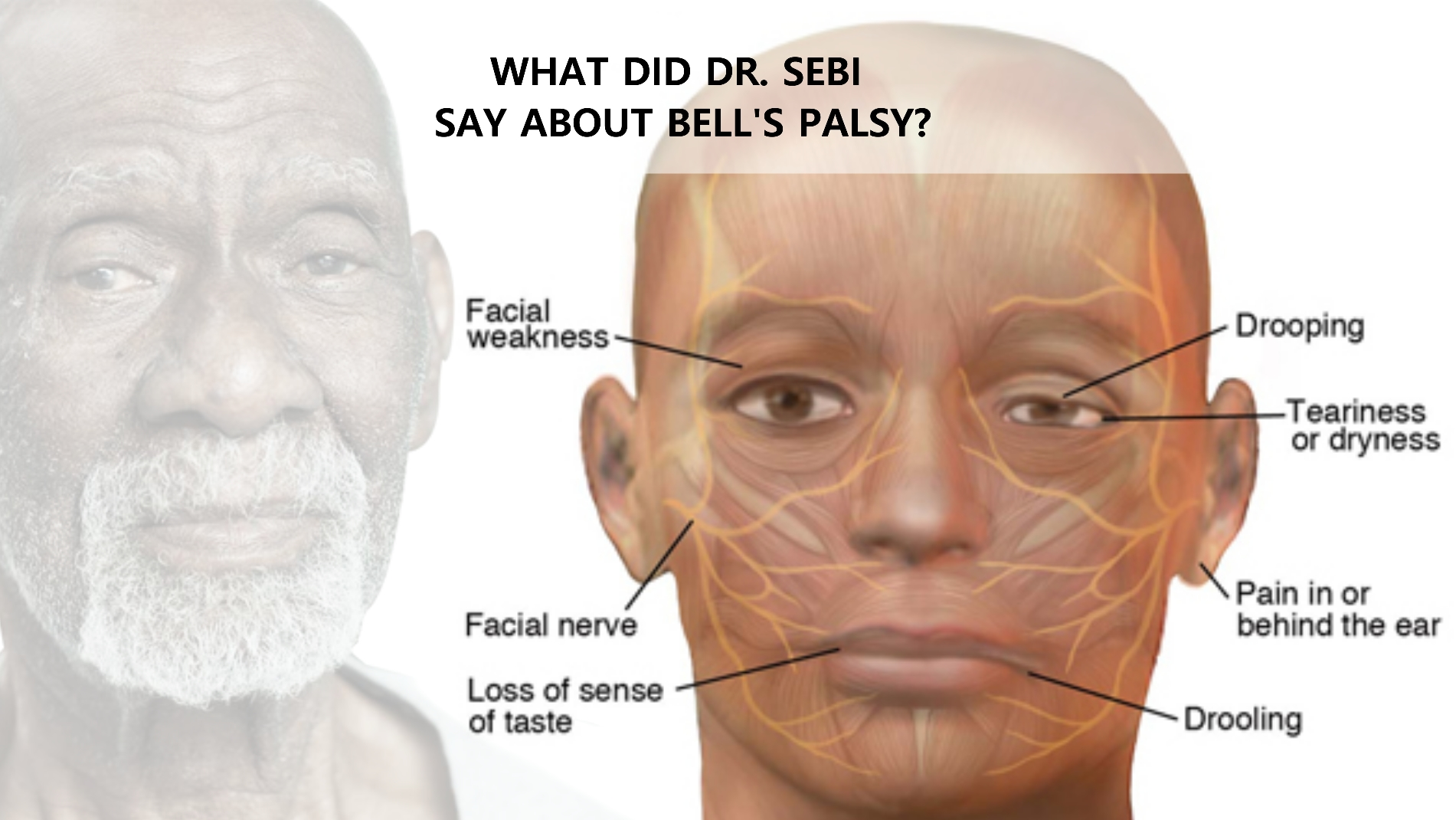 Image result for dr sebi