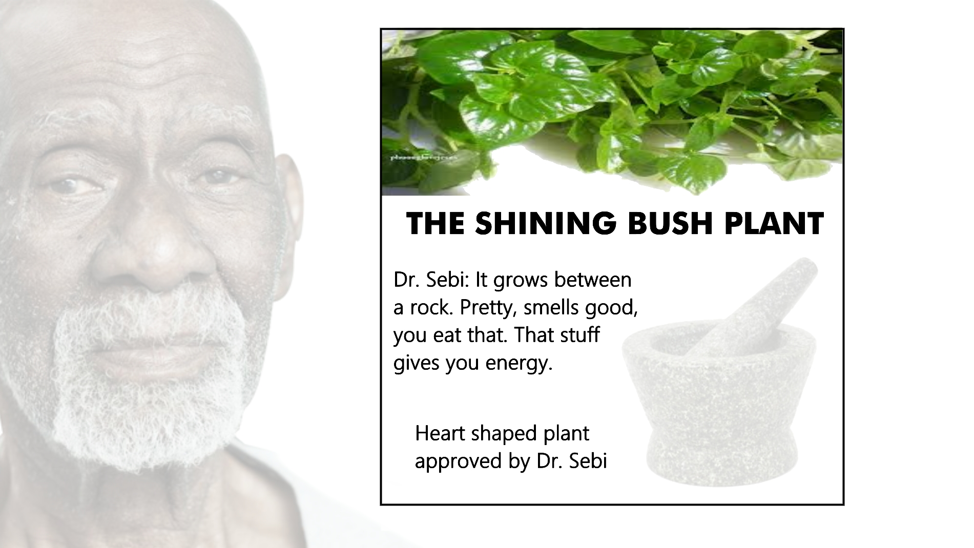 Cell Food Ingredients – Advocates for Dr  Sebi